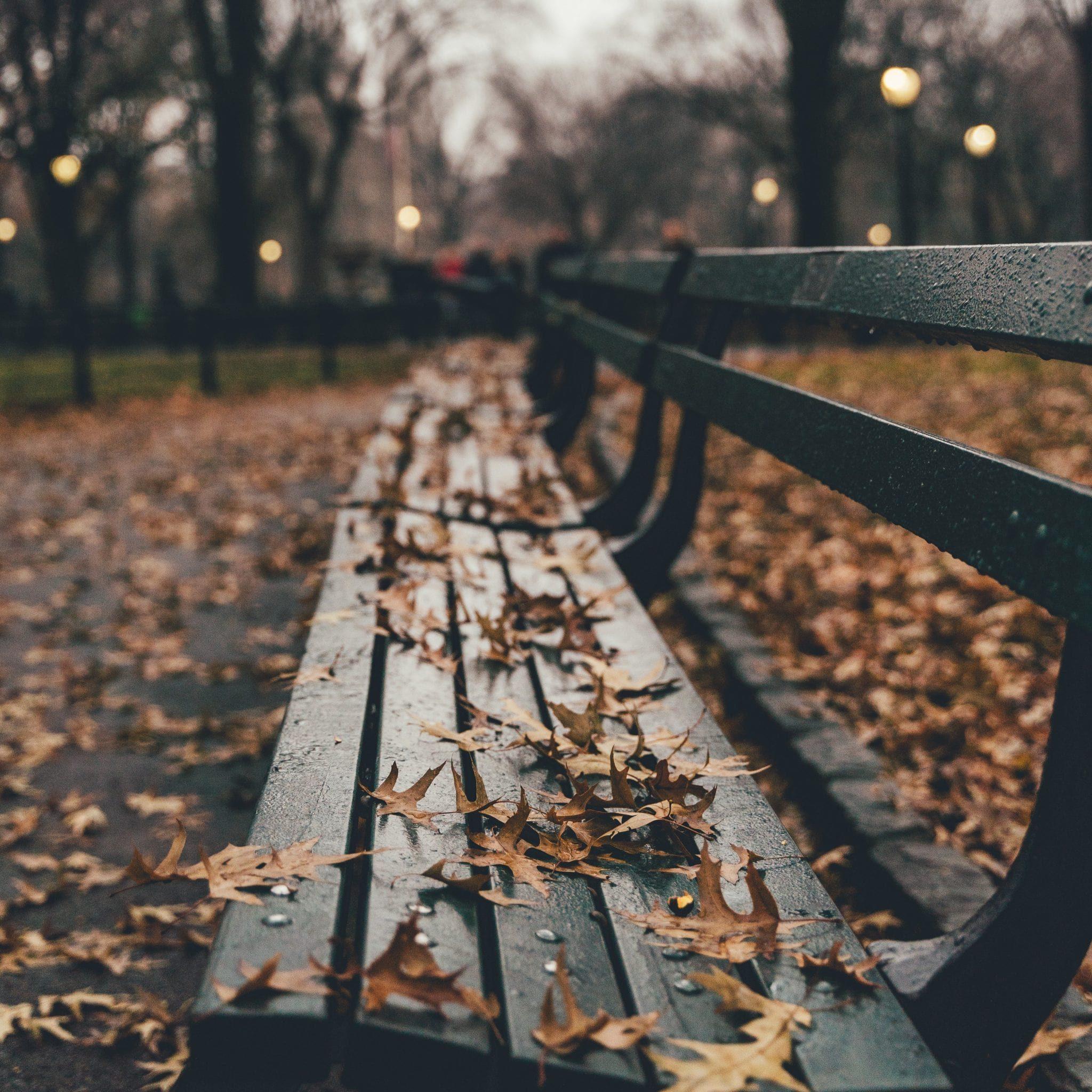 bench - nicole-y-c-pTBD5klYw3Y-unsplash - square